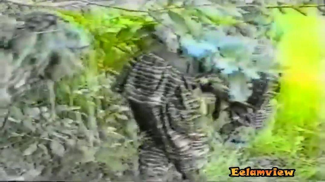 நெருப்பு மலர்கள்